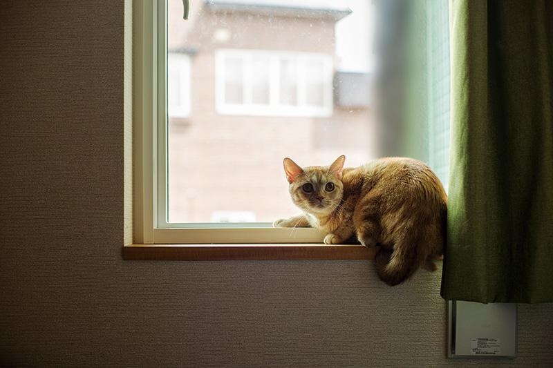 次女の念願だった猫との暮らしも、新築で実現。さまざまな表情をみせるノンちゃんの姿に、家族の笑顔が絶えない